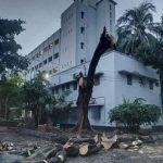 Cutting trees in DU